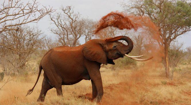 Mambo 15 ya Kushangaza Kuhusu Afrika